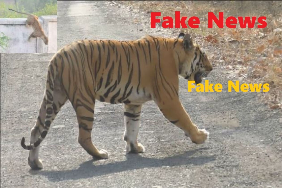 Tiger Fake News