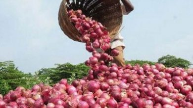 Photo of Onion Price in Nagpur Soars to 120 per KG