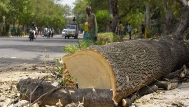 Photo of Rise in Tree Chopping Cases in Nagpur